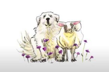 Sensibilisation – Les chiens de protection en montagne